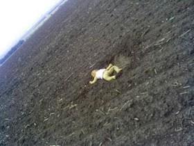 Ukrainian Govt release horrific pic of infant lying in a field, killed when rebels shot down plane
